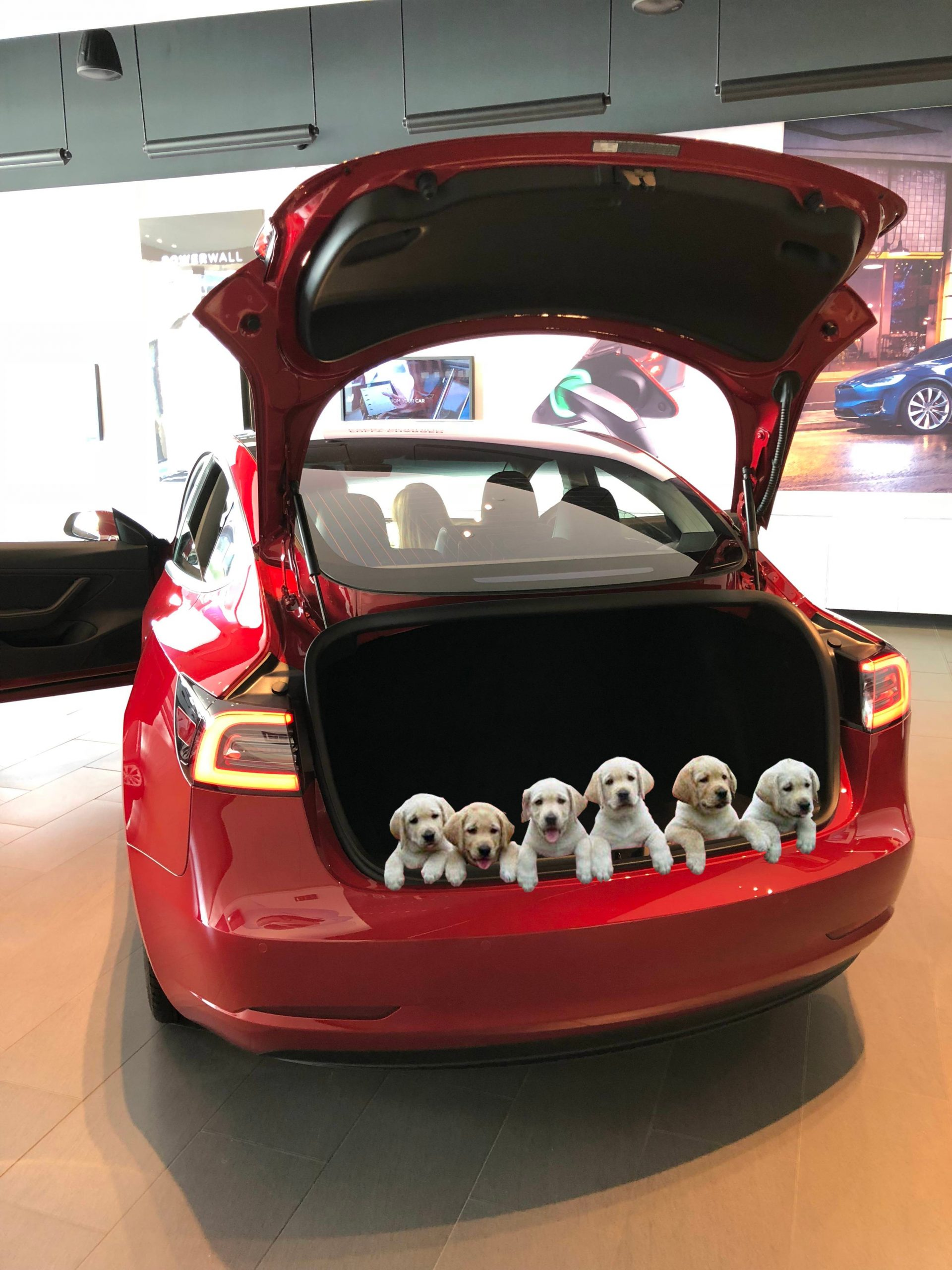 New Sales Incentivize Announced: Free Puppy with Every Tesla Delivered before Year-End